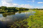 picture of marsh grass  - Rural landscape with river and water lilies and lots of shore grass - JPG