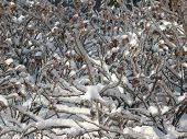 pic of icing  - image of icing on tree at day - JPG