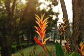 image of bird paradise  - Bird of paradise flower and gardan background with sunlight - JPG