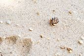 stock photo of hermit crab  - hermit crab in its shell crawling on the sand AoSane - JPG