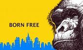 foto of gorilla  - Head gorilla - JPG