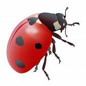 stock photo of ladybug  - Hand drawn vector illustration of a ladybug - JPG