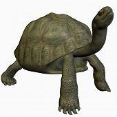 Galapagos Tortoise-Look Up