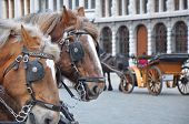 stock photo of blinders  - Two Horse headers with Vehicle in Antwerp - JPG