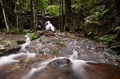 Cascada de la selva Creek