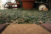 Cold Tempatures Freeze The Moisture On The Lawn