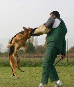 Training Police Dog