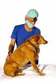 Veterinair With Dog