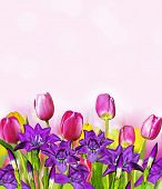 Постер, плакат: Pink Yellow Tulips And Blue Irises