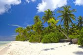 Nice Tropical Forest On The Beach In Indian Ocean