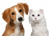 Mixed-breed puppy, 4 months old and a American Curl cat, 1 and a half years old, in front of white b