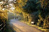 Autumnal walk