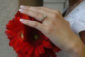 A Bride's Hand