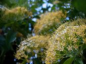 Buah Karang Hutan Blossom