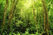 Tropical Rainforest Landscape, Malaysia, Asia