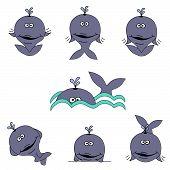 Cute Whale Set
