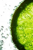 Kalk-Segment im Wasser Blasen