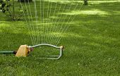 image of sprinkler  - closeup of a lawn sprinkler watering the grass - JPG