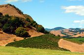 Hillside Vineyard, Sonoma County, California.