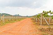 Gravel Roads In The Vineyards