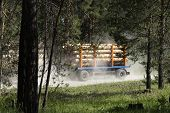 A Truck With A Trailer In The Forest Transports The Cut Trees. Large Transport Loaded With Pine. Tim poster