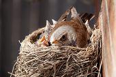 pájaro en el nido
