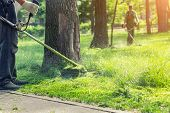Worker Mowing Tall Grass With Electric Or Petrol Lawn Trimmer In City Park Or Backyard. Gardening Ca poster
