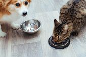 Dog And Cat Are Eaten Together In The Kitchen. Close-up poster