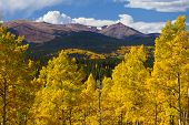 pic of rocky-mountains  - Colorado Rocky Mountains and golden aspen trees in Fall - JPG