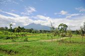 picture of kilimanjaro  - Green landscape with tje Kilimanjaro mountain in tanzania - JPG