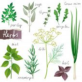 Aromatic herbs set
