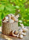 Mushrooms In Straw Basket