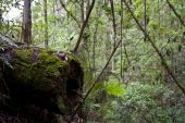 Mossy Log in green rain forest