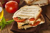 picture of deli  - Homemade Tomato and Mozzarella Panini with Basil - JPG