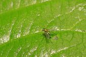 Gadfly On A Green Leaf