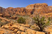 Diverse Desert Landscape In Utah, United States.