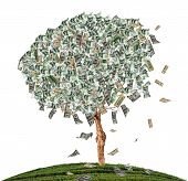 Tree Mix Dollars On White Isolate Background.