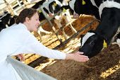 Happy woman in white coat strokes calf small calves at large farm.