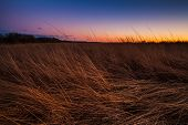 picture of tallgrass  - Prairie grass being lit by the sunset in the dusk lighting - JPG