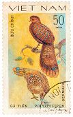 Stamp Printed In Vietnam Shows Polyplectron Germaini, Series Devoted To The Ornamental Birds