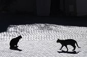 Cats In Castellet Village, France