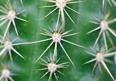 A close up photo of nice specimen of cactus