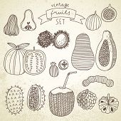 Tasty fruit set in vector - guava, papaya, rambutan, tamarind, feijoa, kiwano, young coconut, passio
