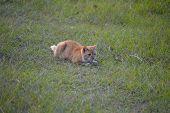 Orange Cat In The Grass