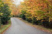 Road Through Autumn Forest.