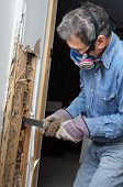 picture of pry  - Man prying sheetrock and wood damaged by termite infestation in house - JPG