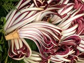 Lots Of Radicchio Heads