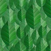 Seamless Green Leaves