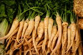 Parsley Roots Laid For Sale