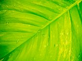 Gree And Yellow Leaf Background